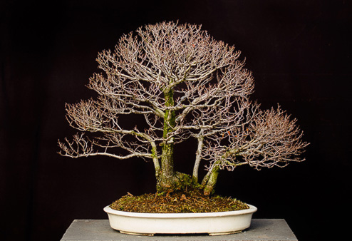 2017-02-25_curs_bonsai_interior