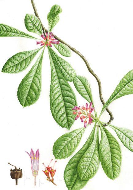 2017-03-04_illustracio_botanica_interior