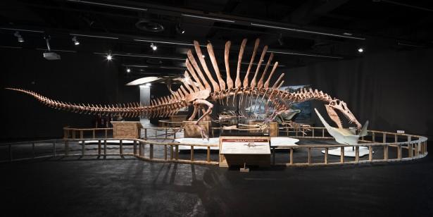 Expo Spinosaurus 08br