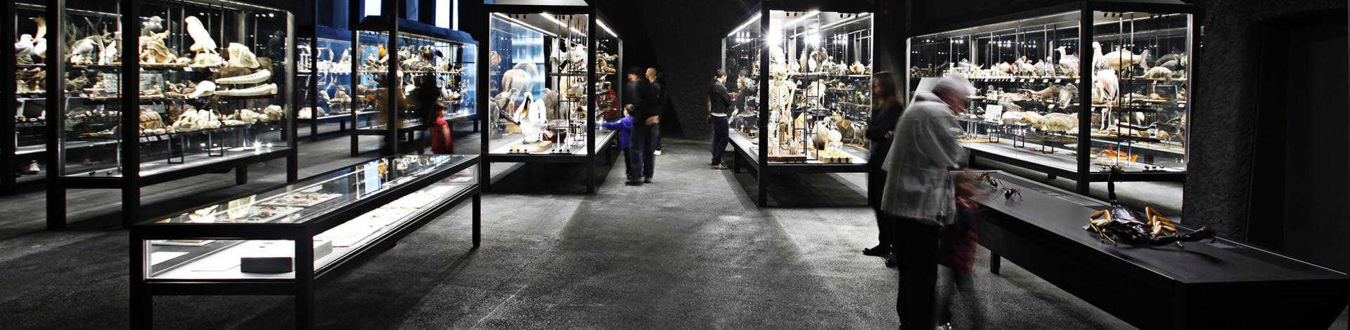 Visita el Museu amb el conservador