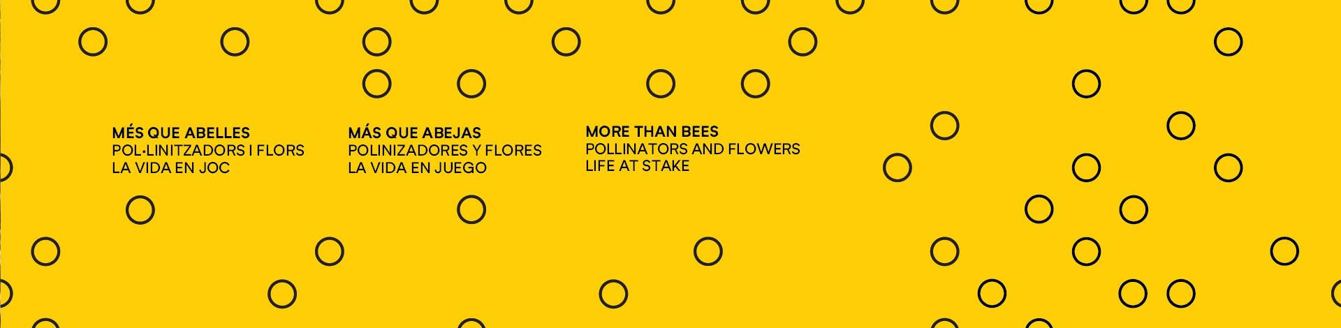 Natura de prop: diversitat d'abelles
