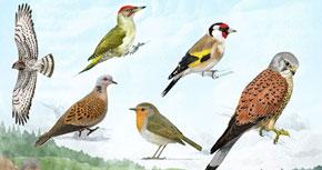 Observació d'ocells