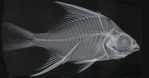 NiuViu: Mar de peixos