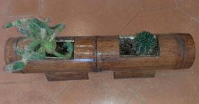 Bambús decoratius