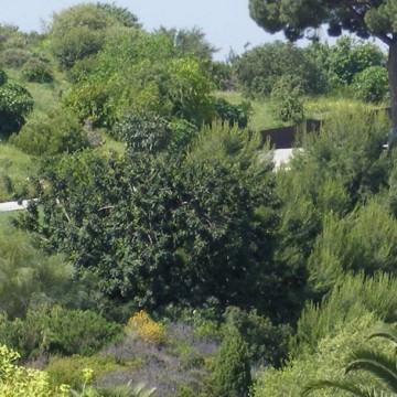 Plantes característiques de la regió Mediterrània del Jardí Botànic EN